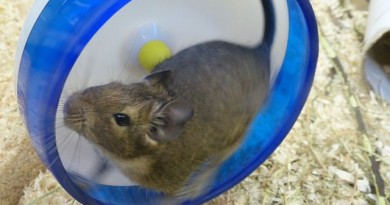 how-much-does-a-hamster-cost