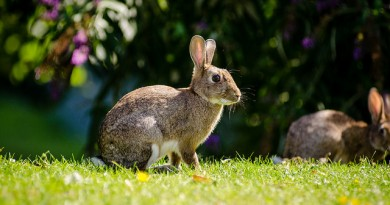 how-much-does-a-rabbit-cost