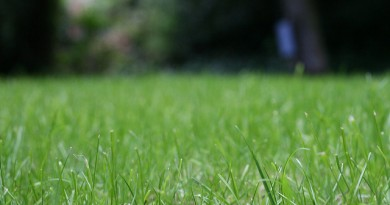 how-much-does-lawn-aeration-cost