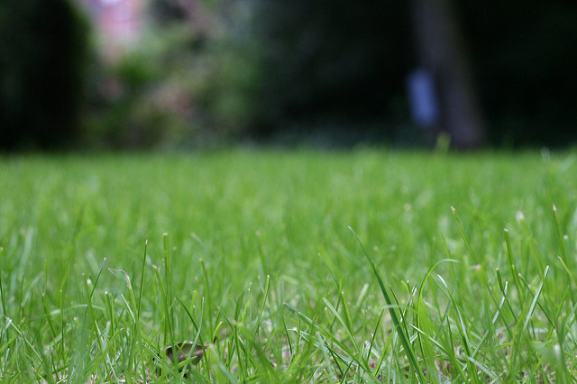 how-much-does-lawn-service-cost